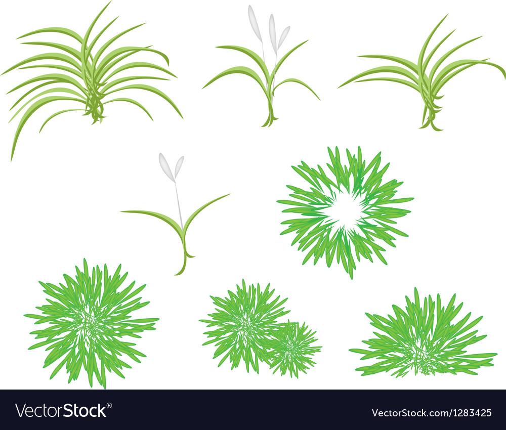 A isometric tree set of dracaena plant vector | Price: 1 Credit (USD $1)