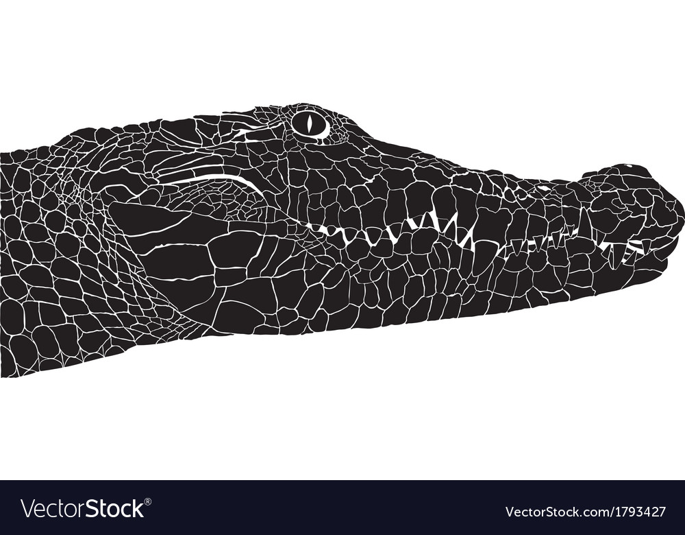 Crocodile head vector | Price: 1 Credit (USD $1)