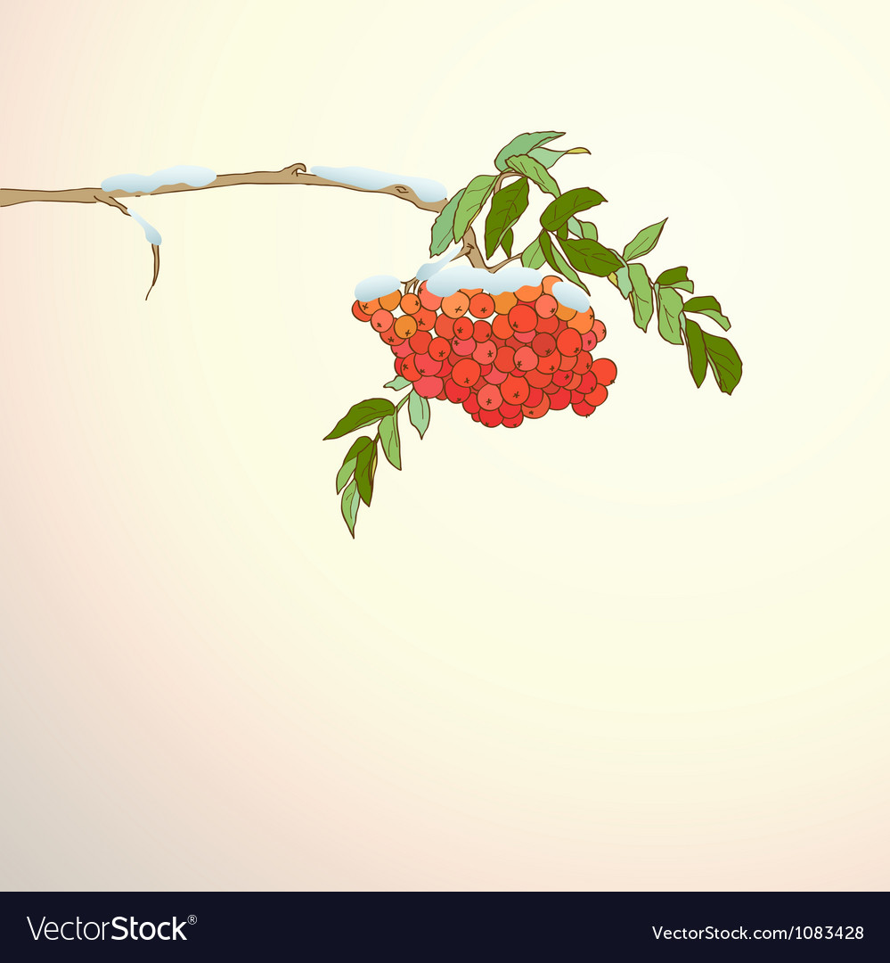 Background with rowan branch vector | Price: 1 Credit (USD $1)