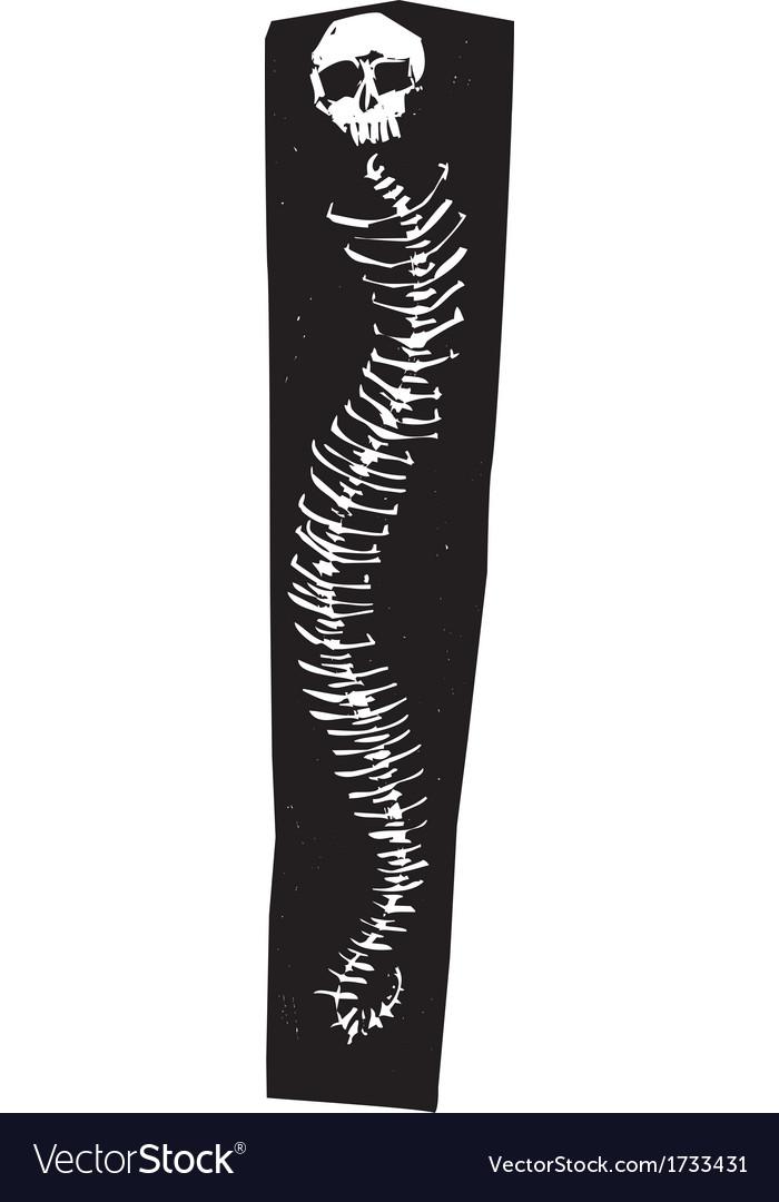 Snake spine vector | Price: 1 Credit (USD $1)