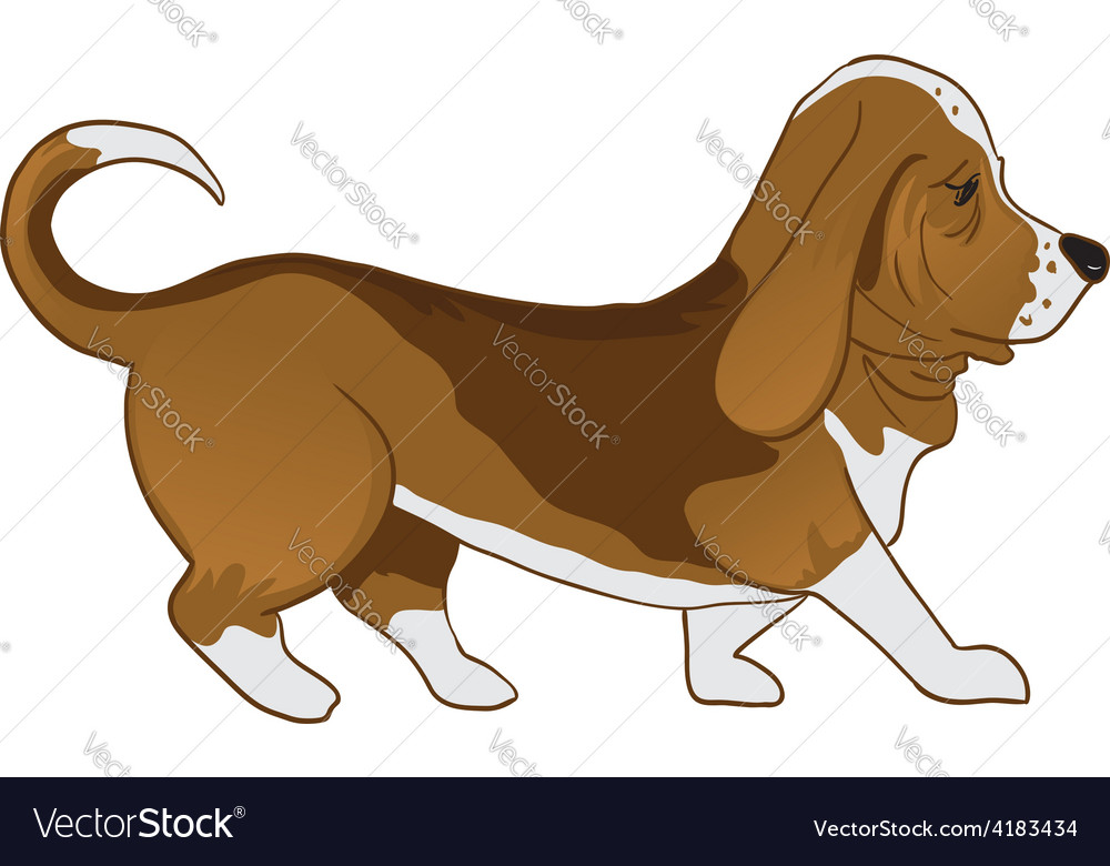 Basset hound vector | Price: 1 Credit (USD $1)