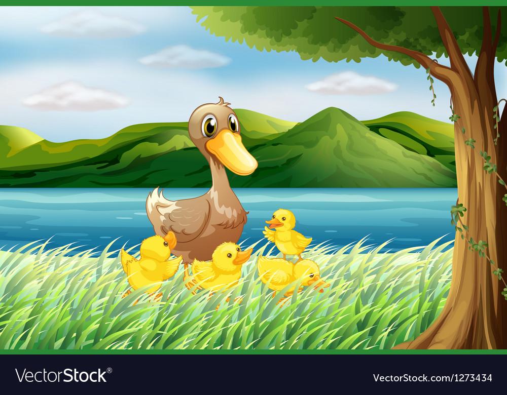 Five ducks at the riverbank vector