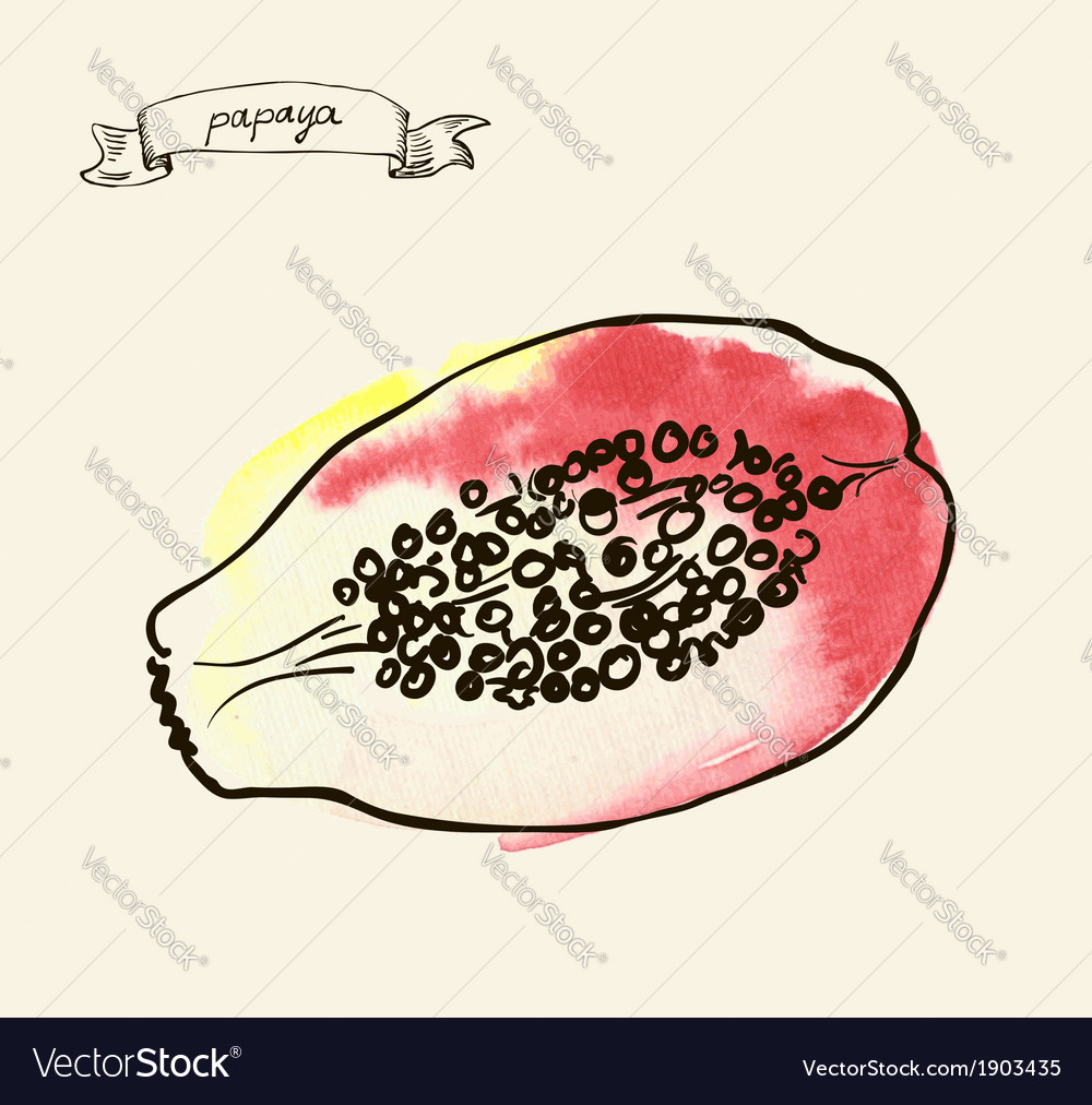Papaya sketch vector | Price: 1 Credit (USD $1)