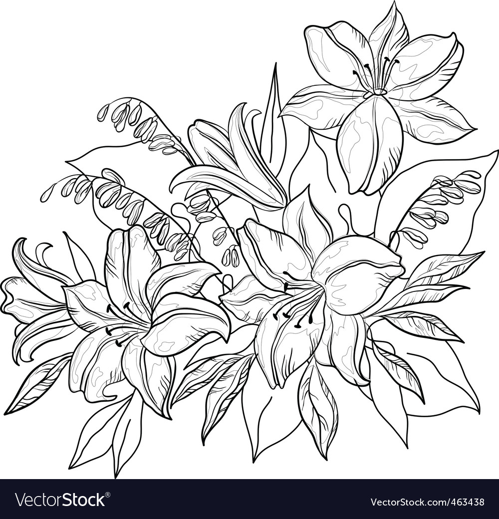 Flower lily contours vector