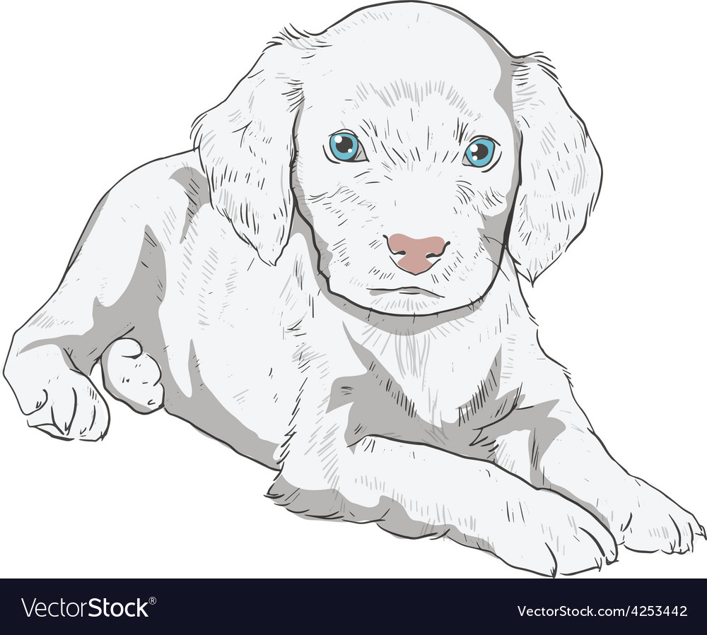 Little puppy on a white background vector | Price: 1 Credit (USD $1)