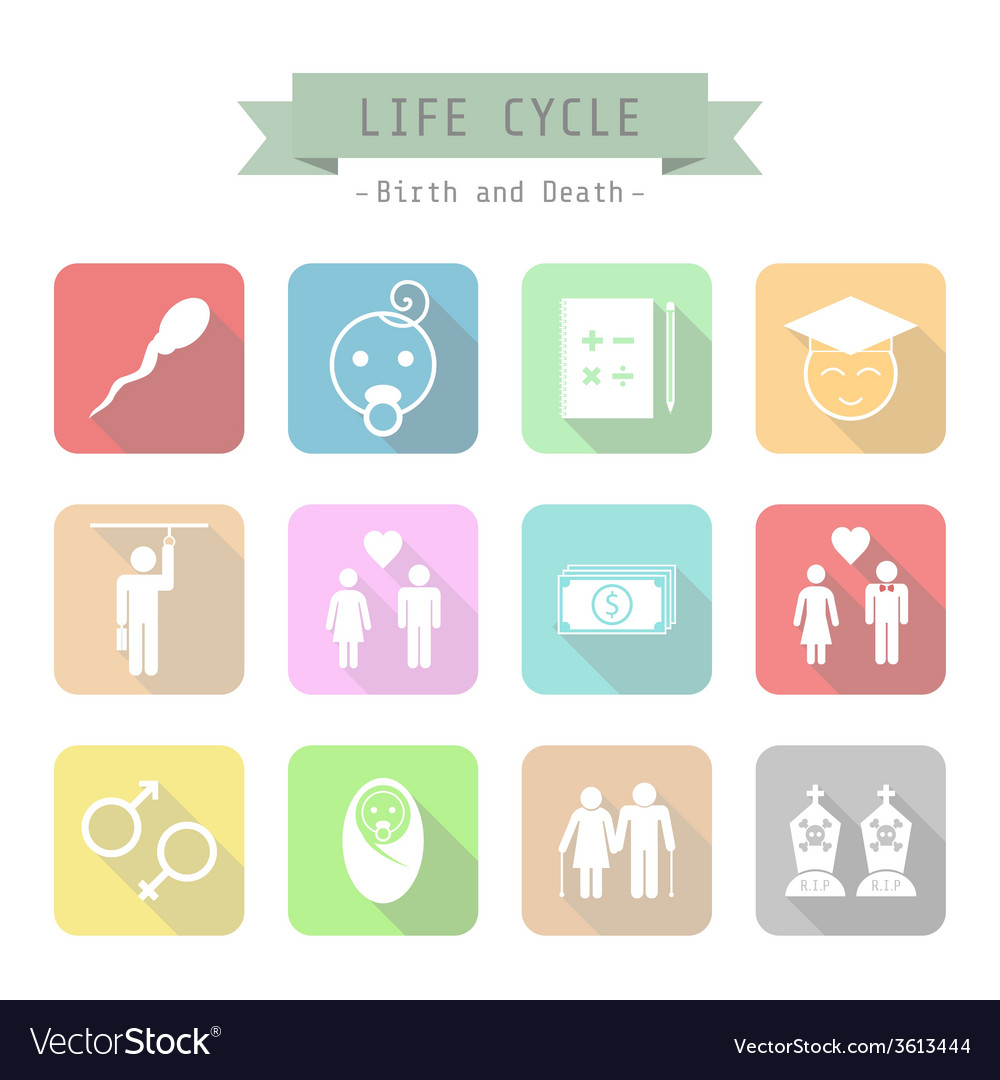 43lifecycle vector | Price: 1 Credit (USD $1)