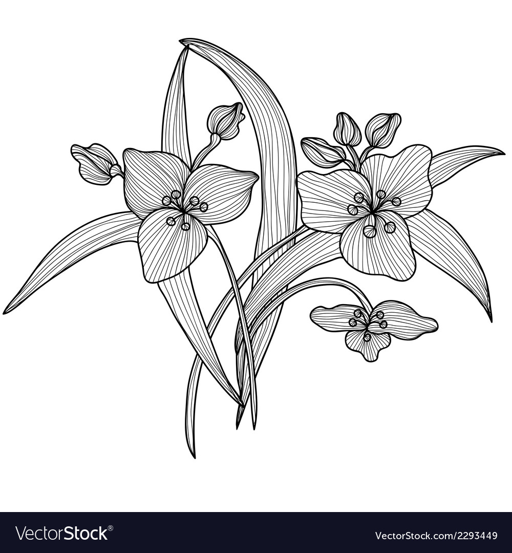Decorative lily flowers vector | Price: 1 Credit (USD $1)