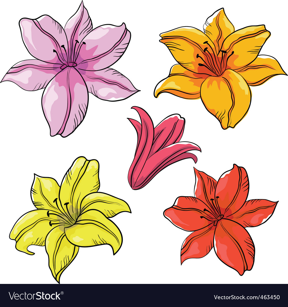 Flower lily vector | Price: 1 Credit (USD $1)