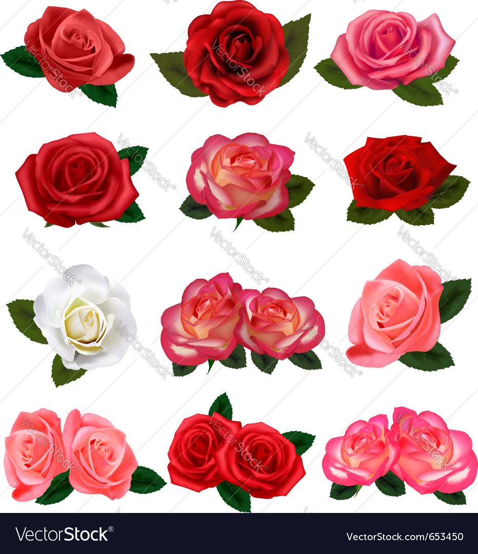 Roses vector | Price: 3 Credit (USD $3)