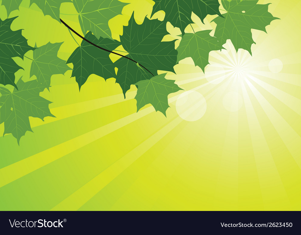 Sunbeams and maple leaves vector | Price: 1 Credit (USD $1)