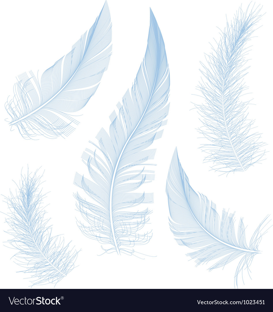 Blue feathers vector | Price: 1 Credit (USD $1)