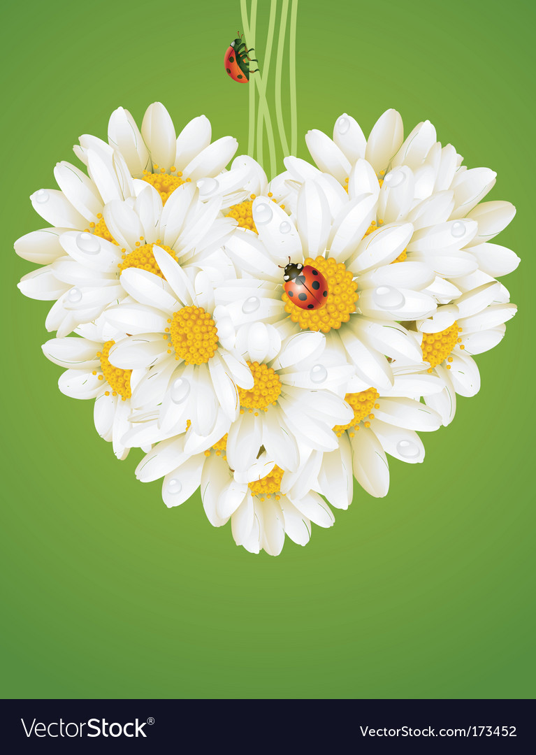 Floral love card chamomile heart vector | Price: 3 Credit (USD $3)