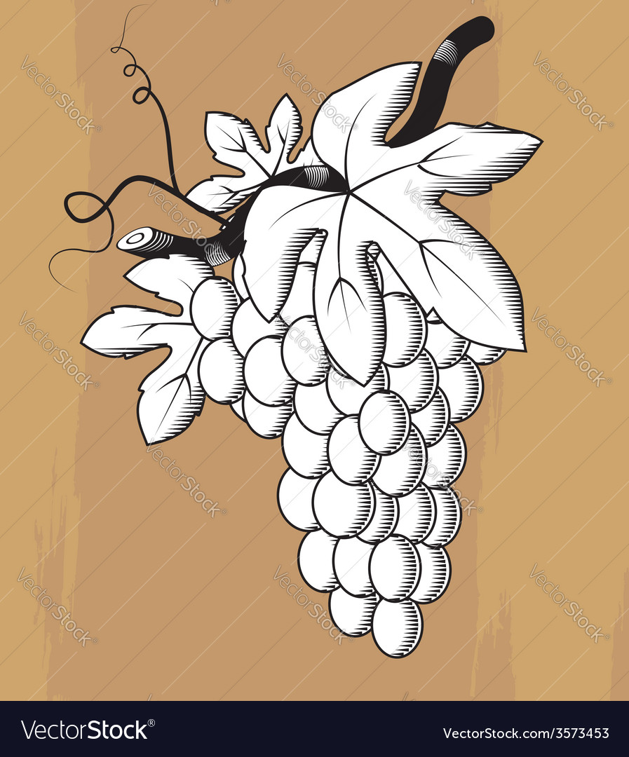 Woodcut styled bunch of grapes vector | Price: 1 Credit (USD $1)