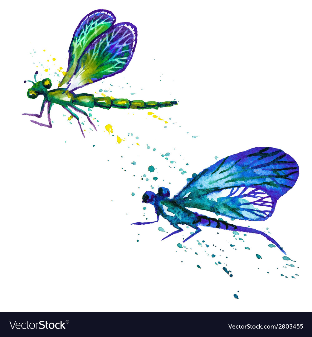 Watercolor dragonflies isolated on the white vector | Price: 1 Credit (USD $1)