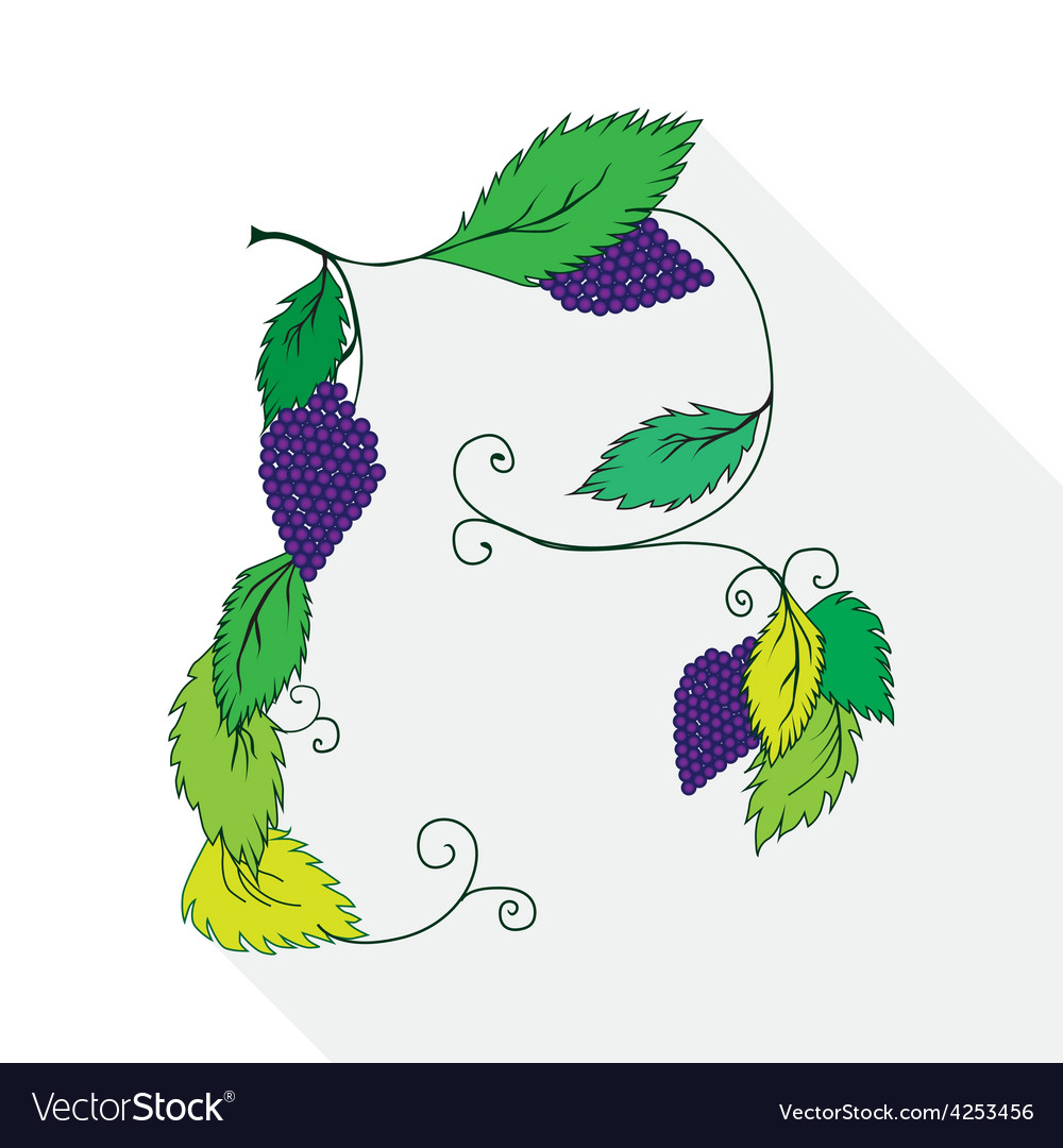 A bunch of grapes isolated on vector | Price: 1 Credit (USD $1)