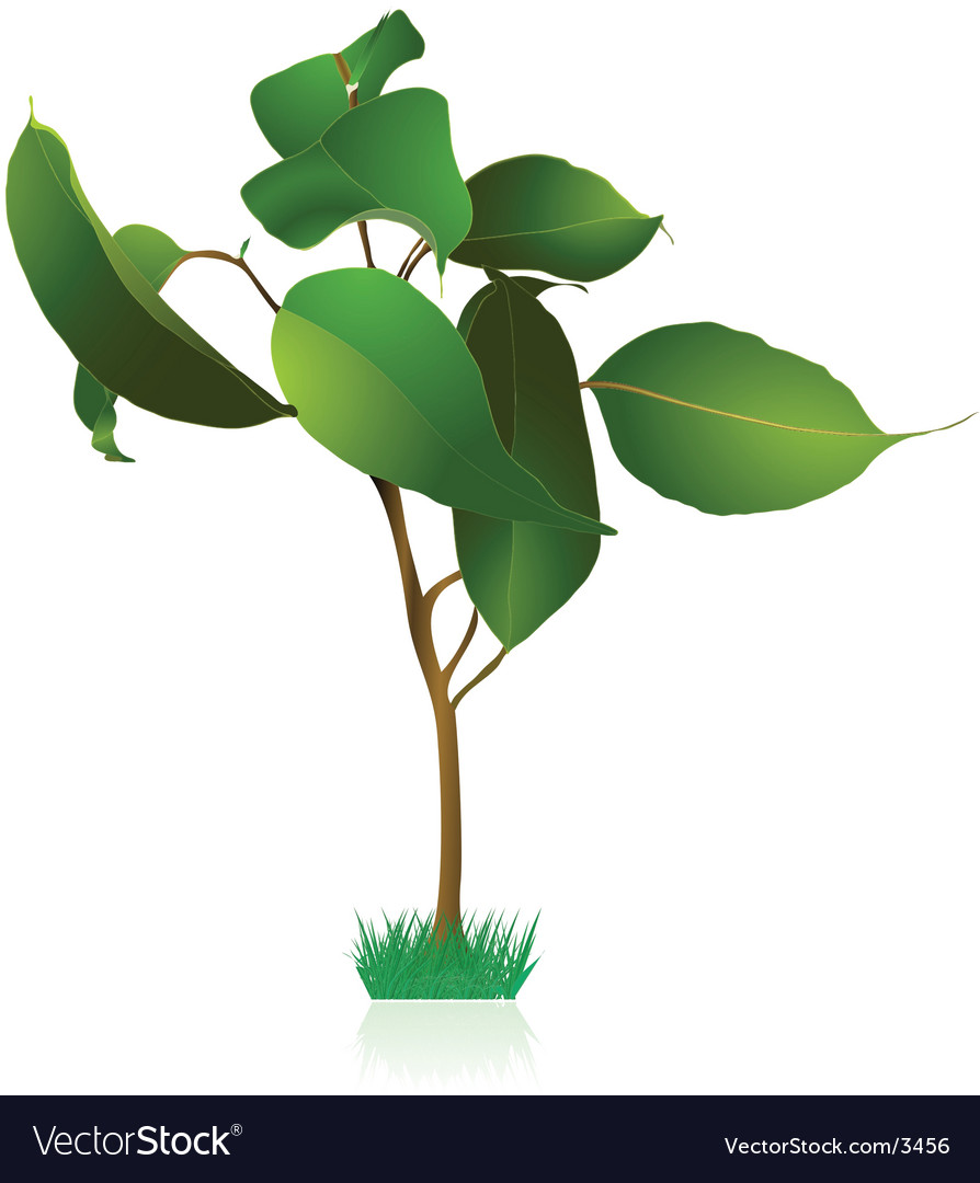 Plants and flowers sapling vector   Price: 1 Credit (USD $1)
