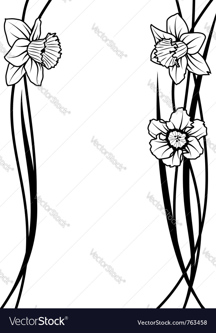 Narcissus floral composition vector | Price: 1 Credit (USD $1)