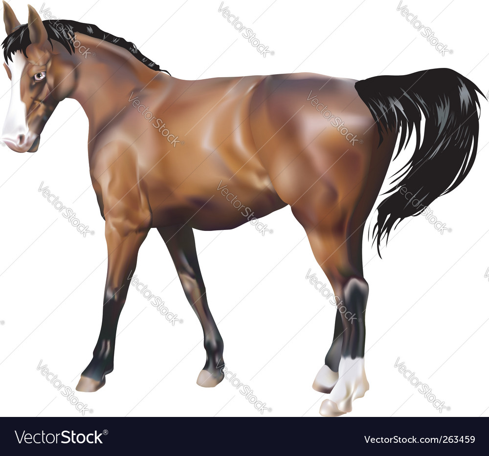 Horse illustration vector | Price: 1 Credit (USD $1)
