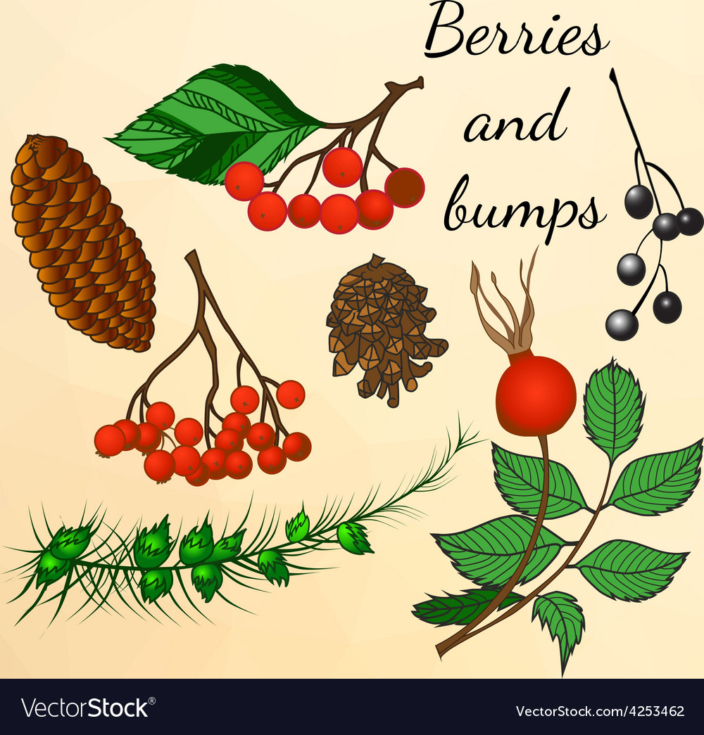 Set of forest berries and bumps in autumn style vector | Price: 1 Credit (USD $1)