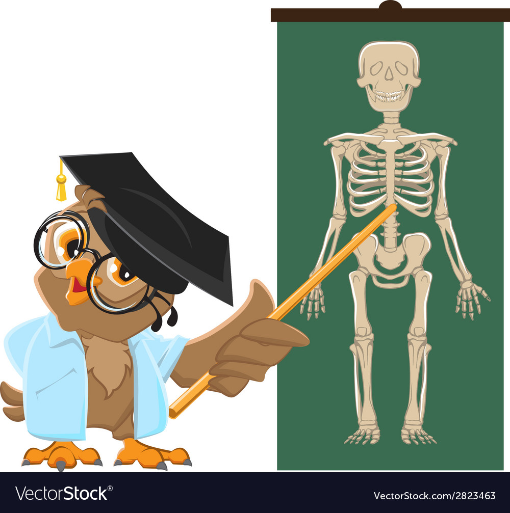 Owl teacher anatomy lesson the study of the human vector | Price: 1 Credit (USD $1)