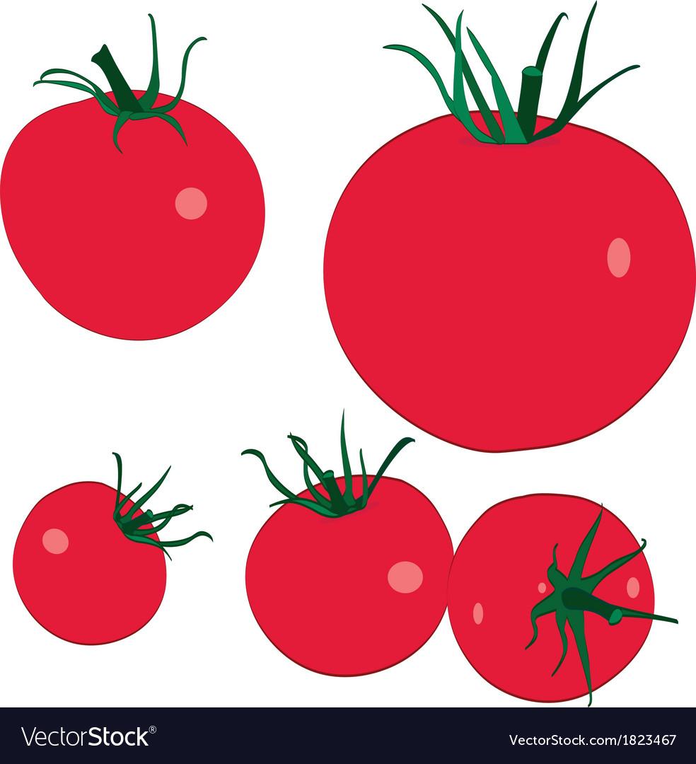 Tomatoi final vector | Price: 1 Credit (USD $1)