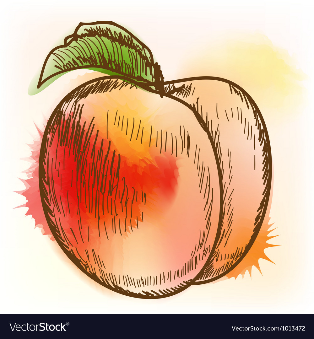 Peach watercolor painting vector | Price: 1 Credit (USD $1)