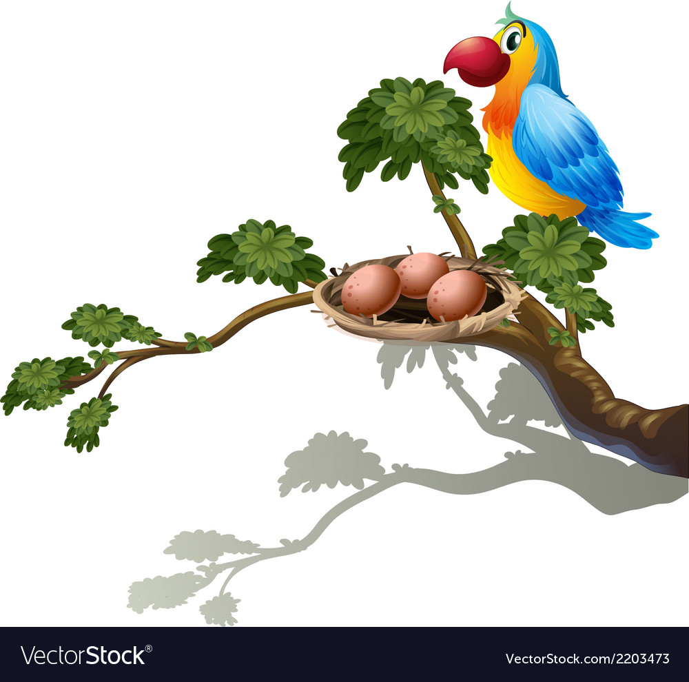 A big branch of a tree with a nest and a bird vector | Price: 1 Credit (USD $1)