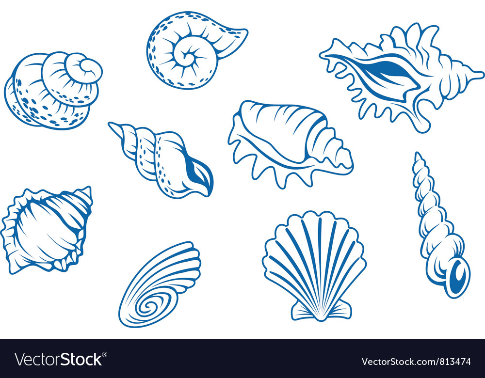 Ocean seashells vector | Price: 1 Credit (USD $1)
