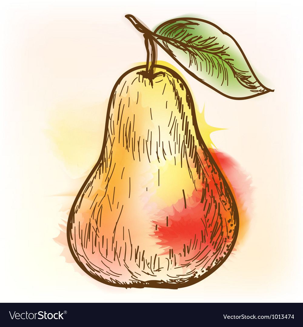 Pear watercolor painting vector | Price: 1 Credit (USD $1)