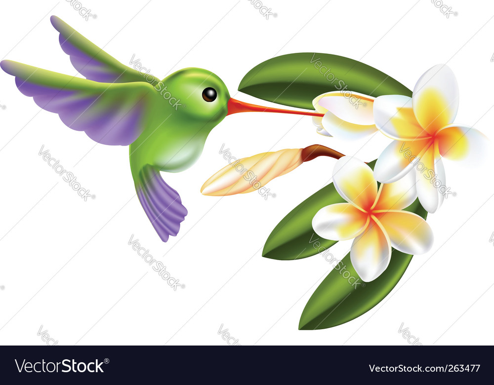 Humming bird and flowers vector | Price: 1 Credit (USD $1)