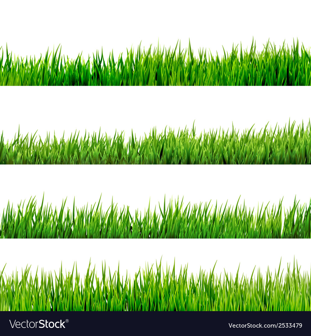 Grass isolated on white eps 10 vector | Price: 1 Credit (USD $1)