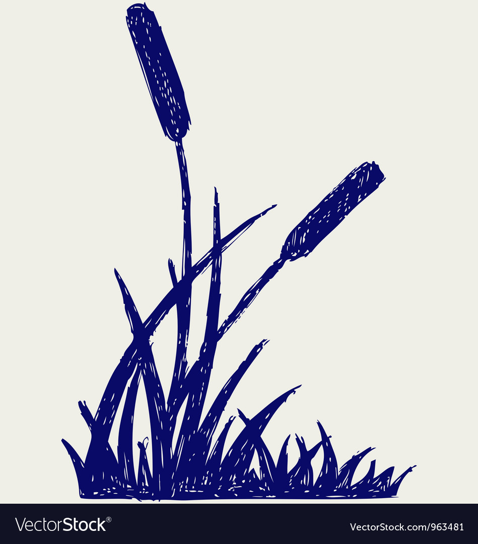 Swamp sketch vector | Price: 1 Credit (USD $1)