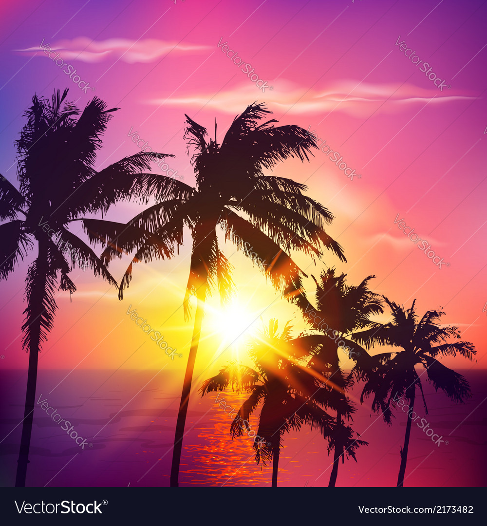 Palm silhouettes on summer sunset vector | Price: 1 Credit (USD $1)