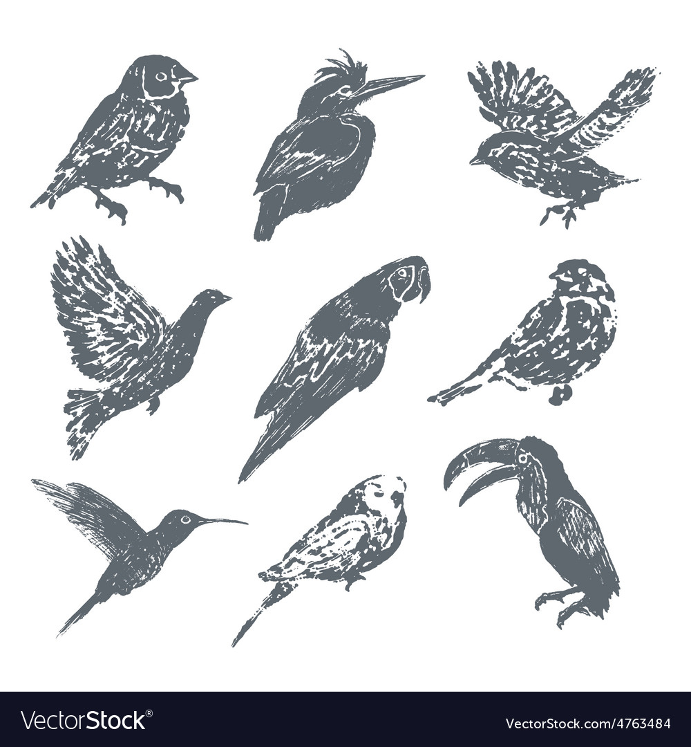 Ink hand drawn bird set vector | Price: 1 Credit (USD $1)