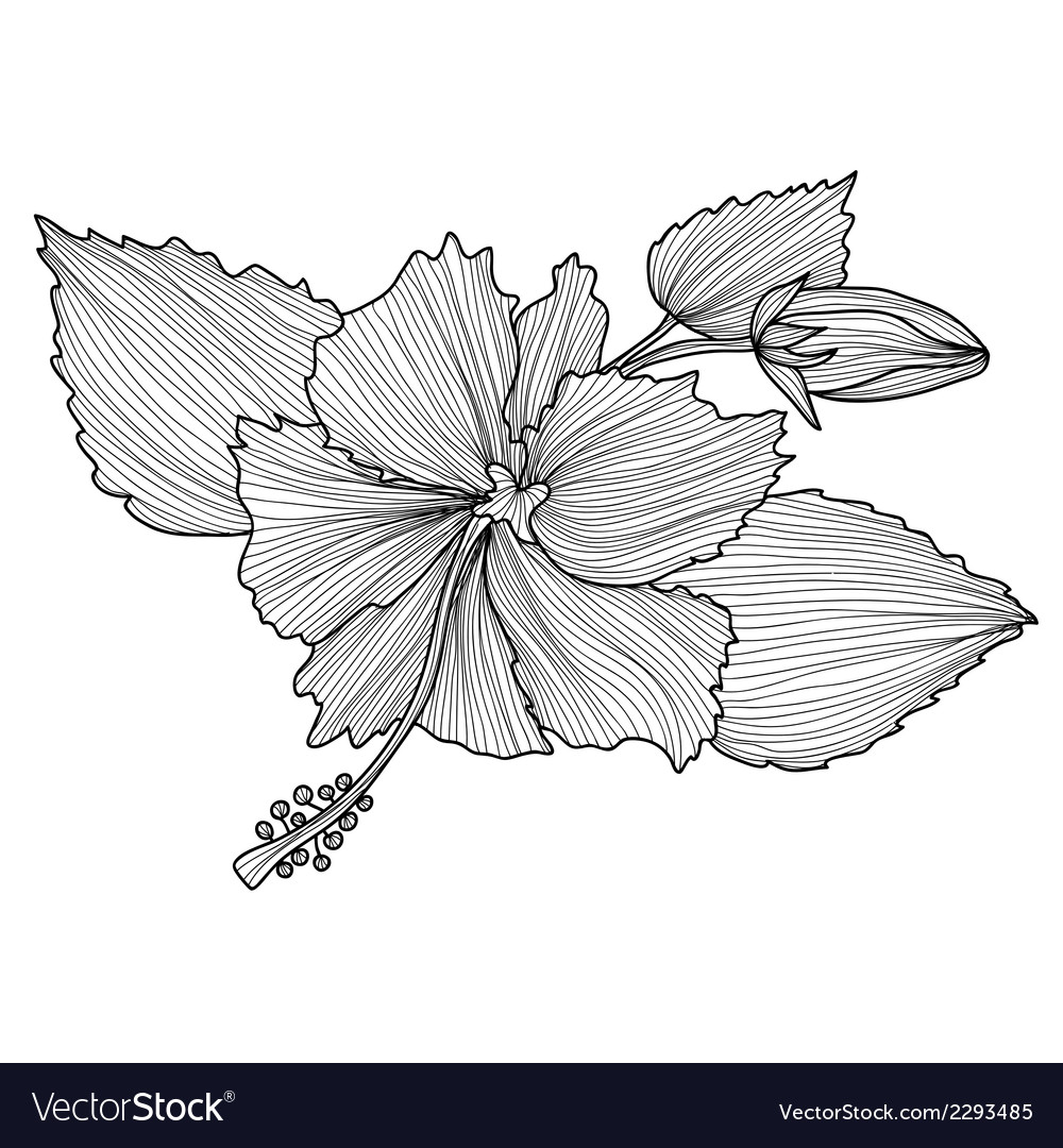 Decorative hibiscus vector | Price: 1 Credit (USD $1)