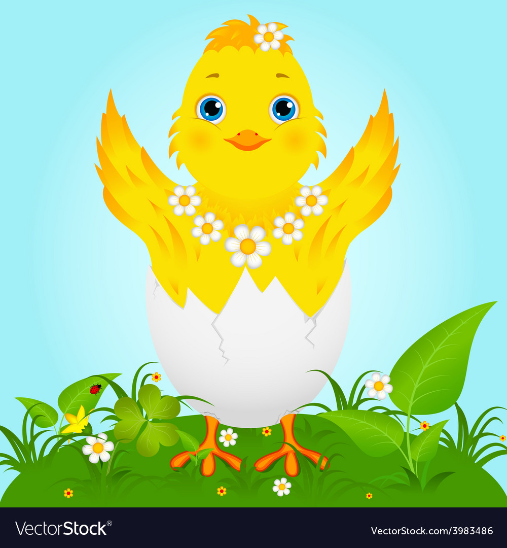 Cute baby chicken vector | Price: 1 Credit (USD $1)