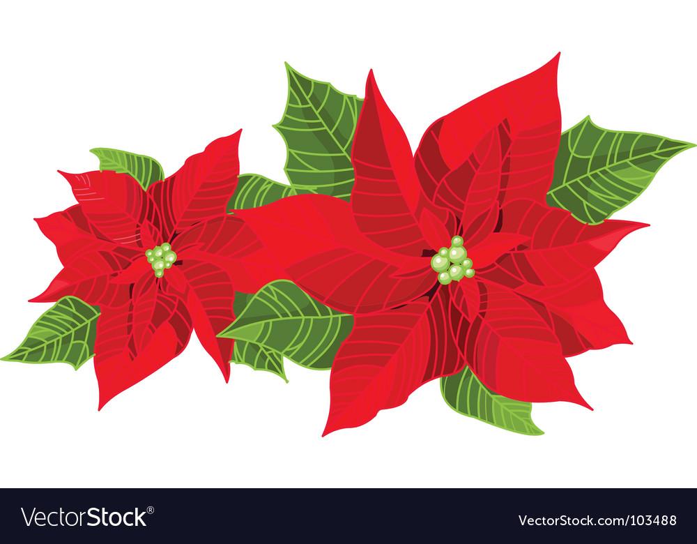 Christmas decoration poinsettia vector | Price: 1 Credit (USD $1)