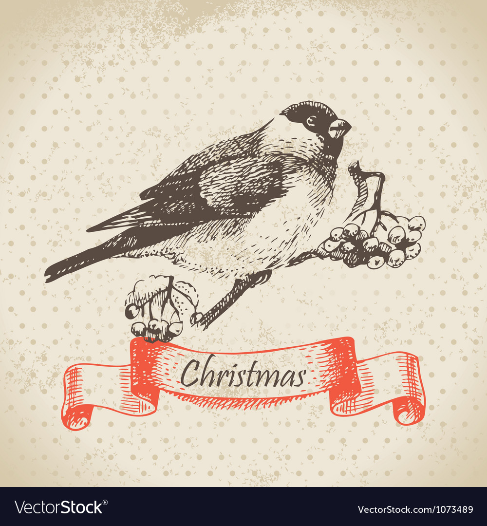 Christmas bullfinch and ashberry vector | Price: 1 Credit (USD $1)