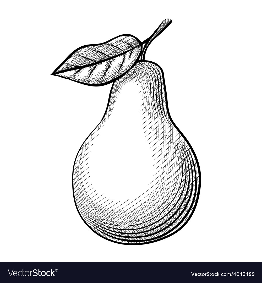 Etching pear vector   Price: 1 Credit (USD $1)