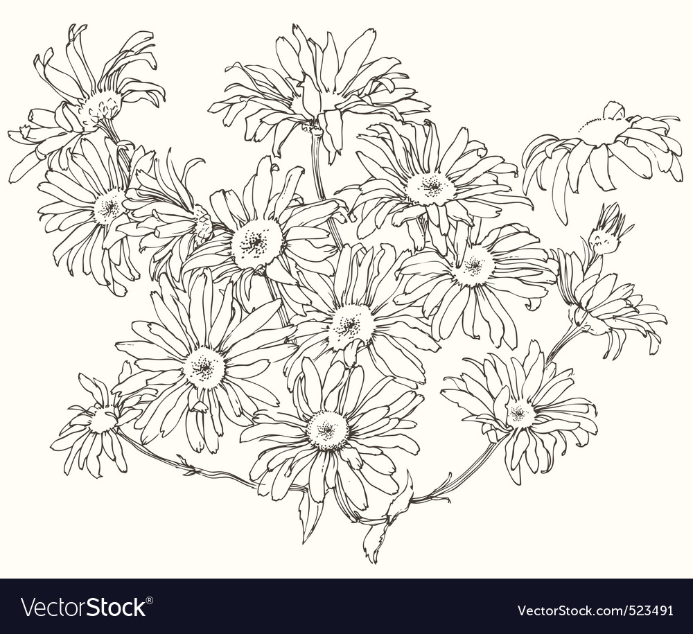 Daisy flowers vector | Price: 1 Credit (USD $1)
