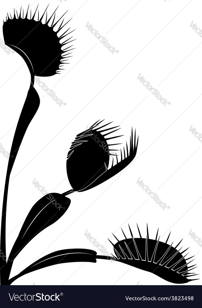 Venus flytrap vector | Price: 1 Credit (USD $1)