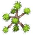 Yucca brevifolia vector