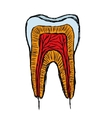 Doodle tooth vector