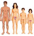Genitals vector