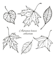 Set of outline autumn leaves vector