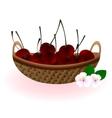 Basket of cherries vector