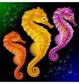 Seahorses vector
