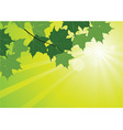 Sunbeams and maple leaves vector