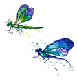 Watercolor dragonflies isolated on the white vector