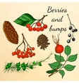 Set of forest berries and bumps in autumn style vector